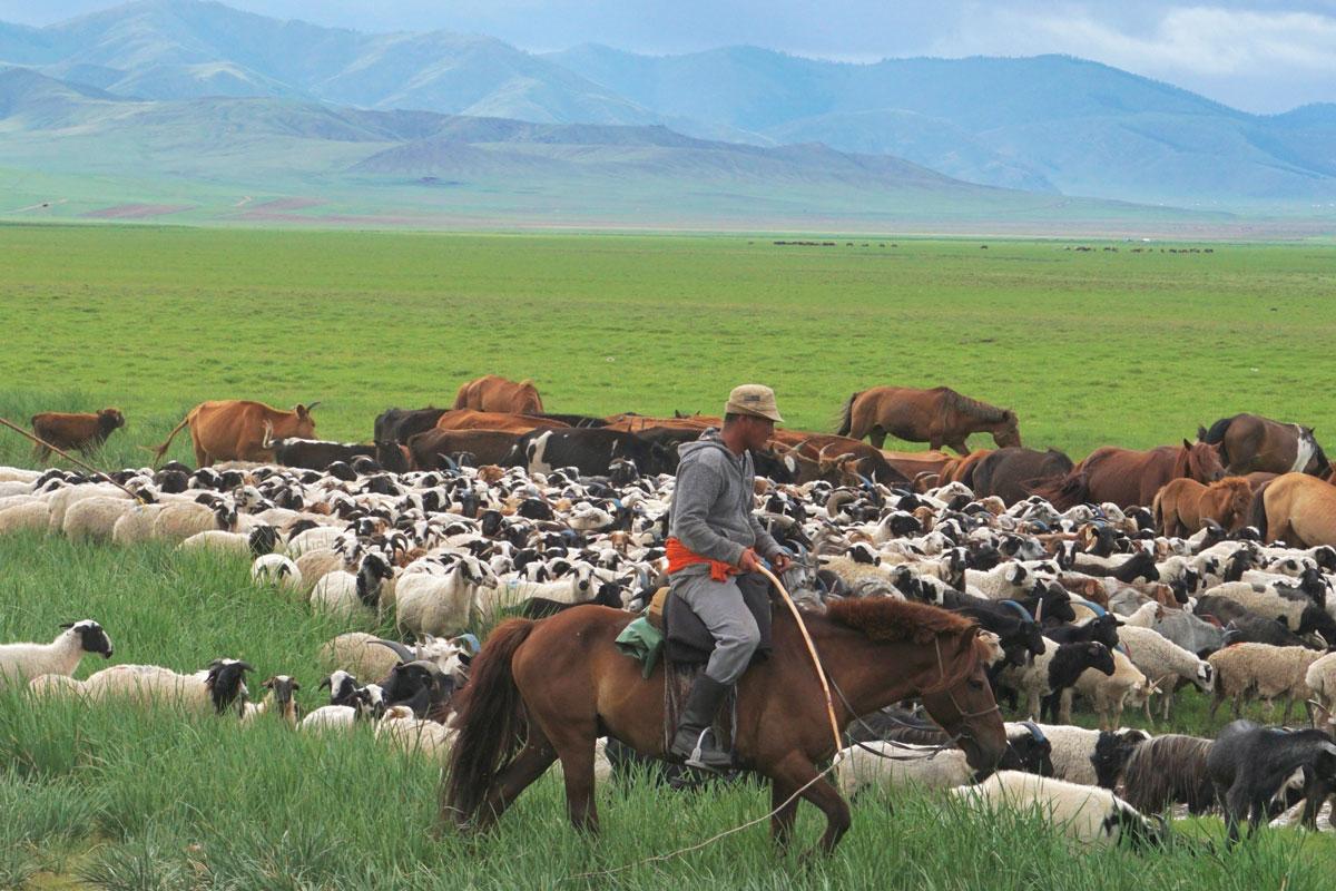 Herding-PS1200