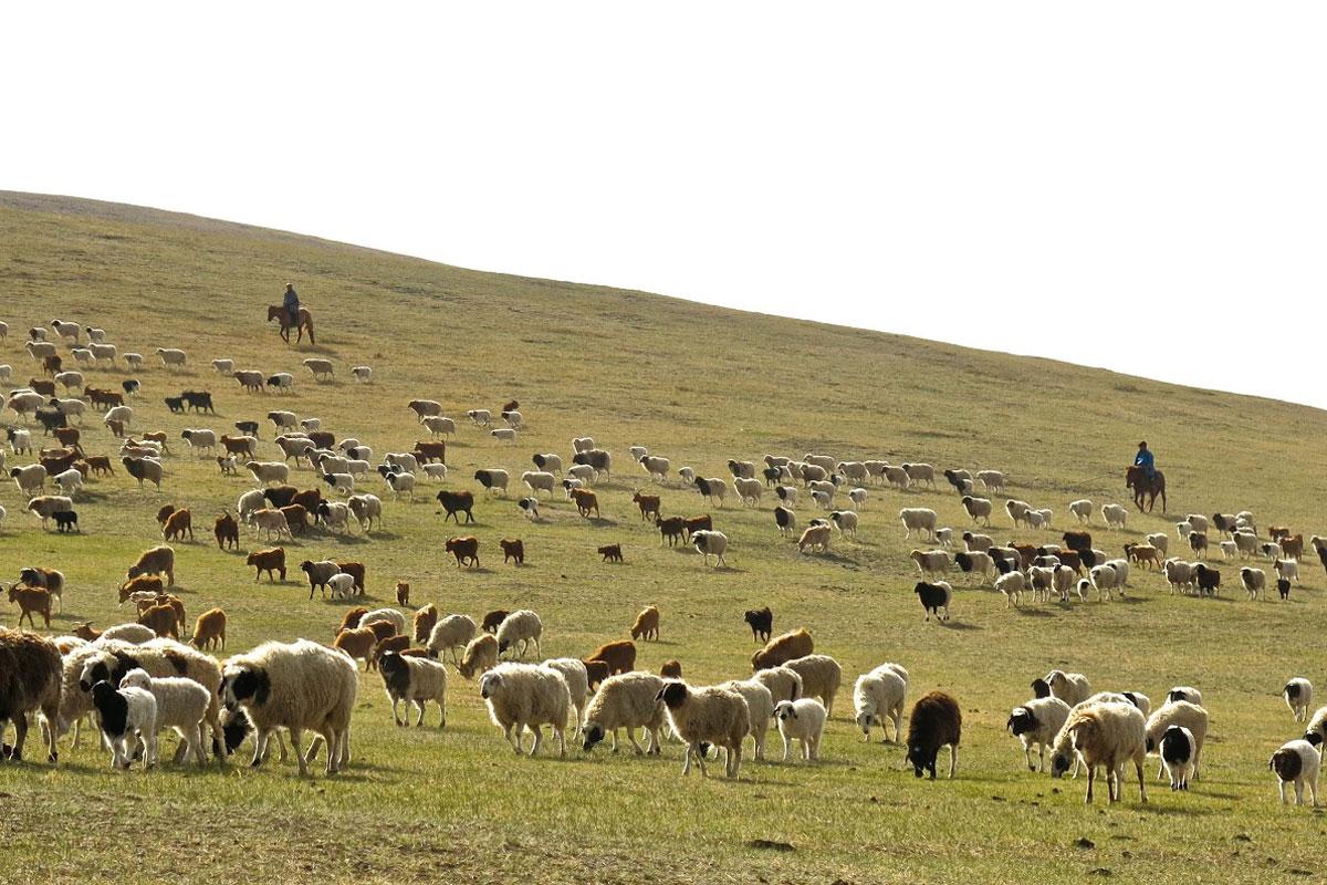 Photo of Erdenebulgan, Mongolia